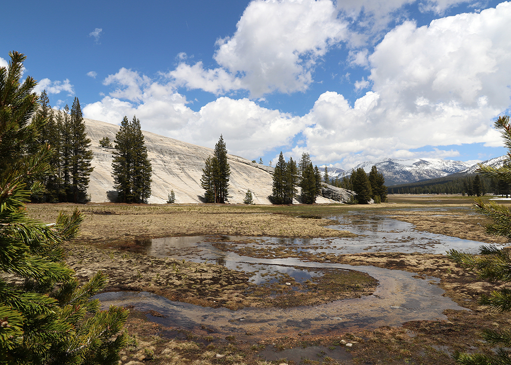 Yosemite Tuolumne Meadows web.jpg