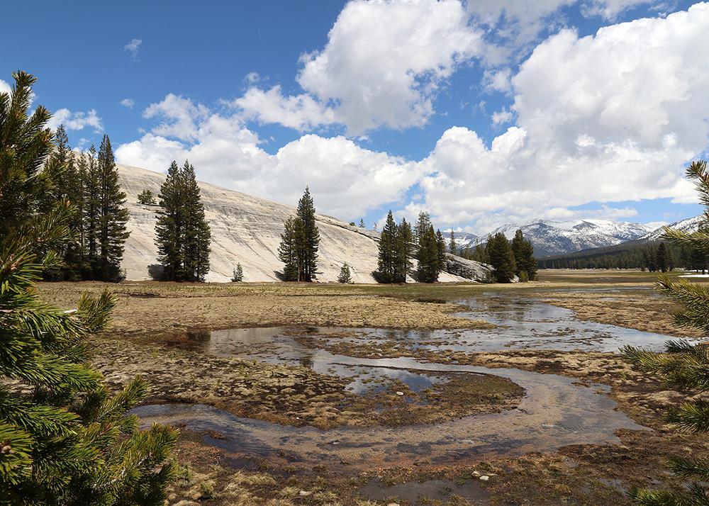 Yosemite Tuolumne Meadows web.jpg