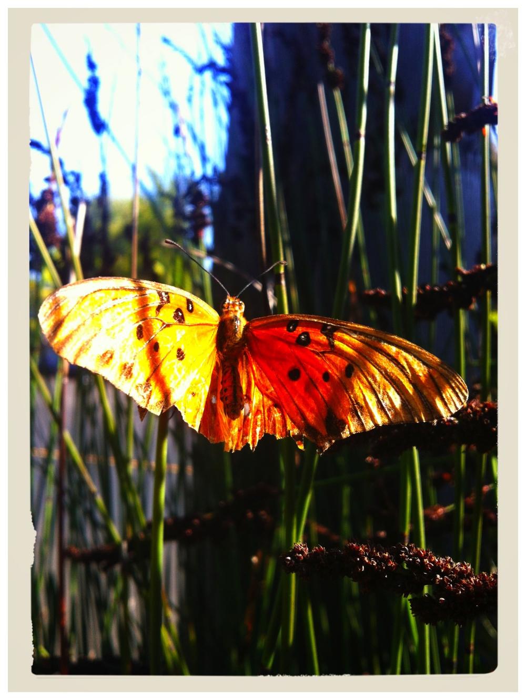 Butterfly3.5.jpg