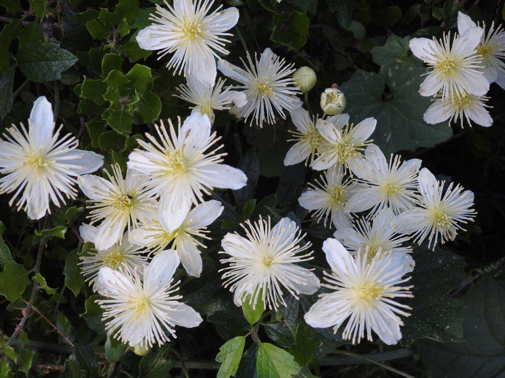 Topanga Wild Flowers