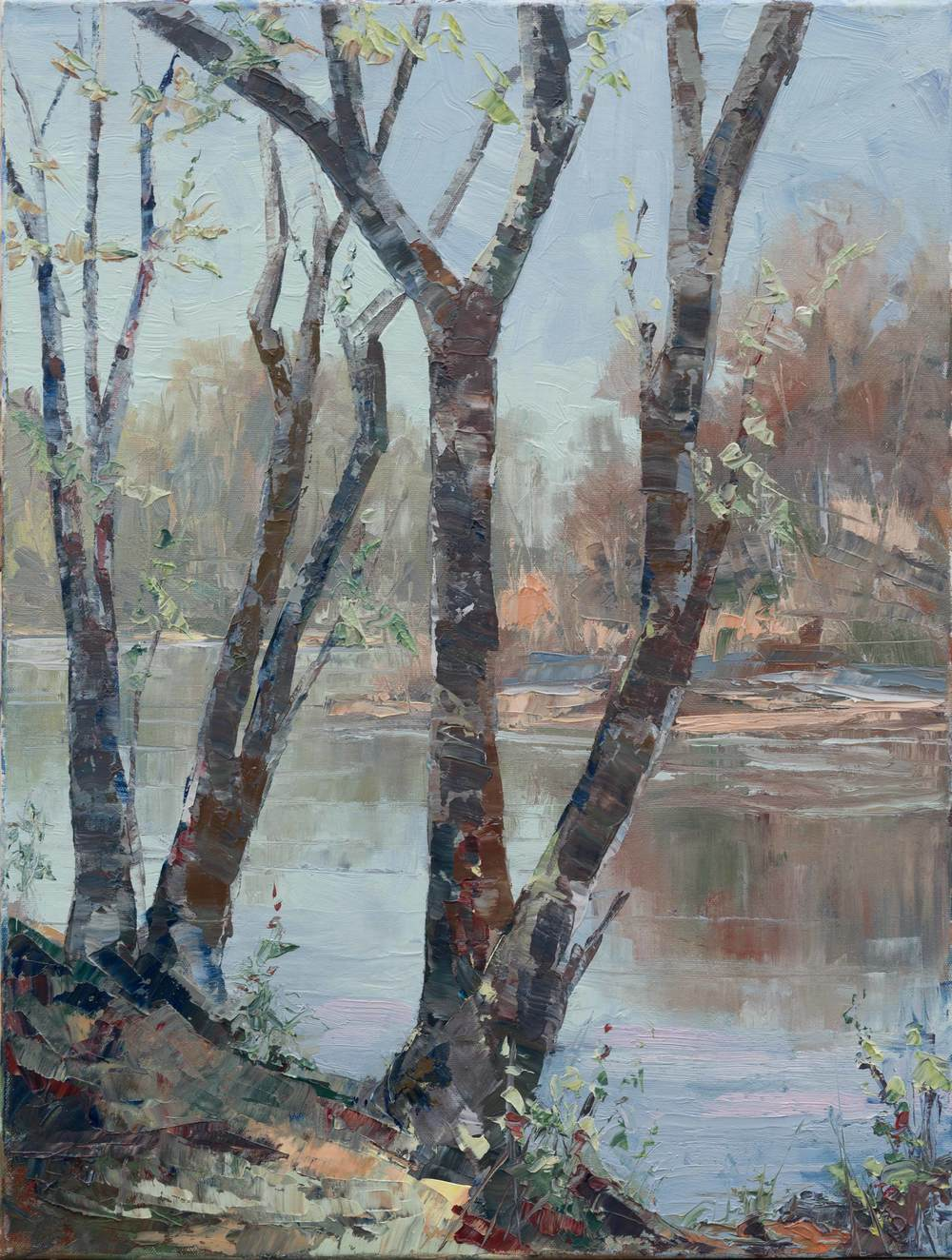 Trees of the boise river