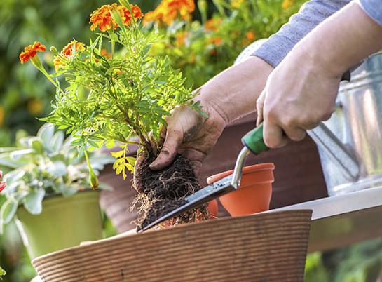 cs-gardening-allergy-tips-722x406-e1458323755276.jpg