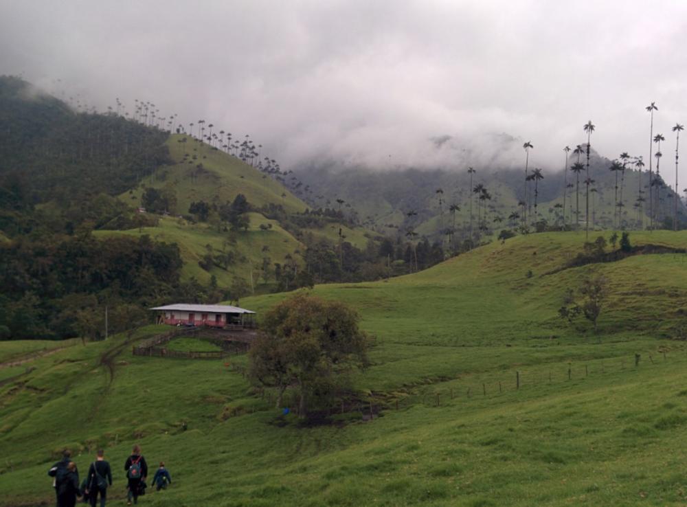 Valle De Cocora In Salento