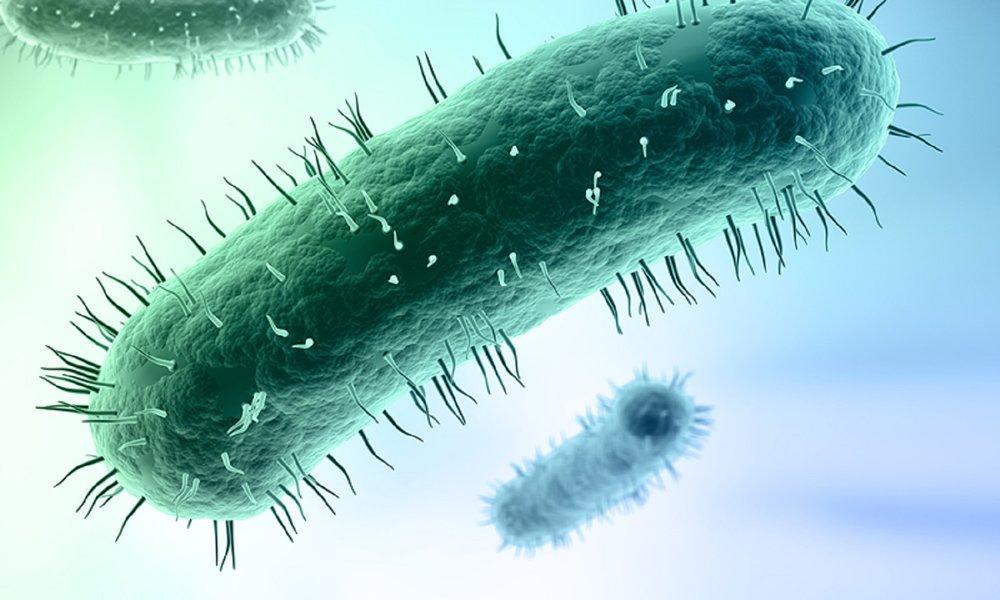 mycoplasma.jpg