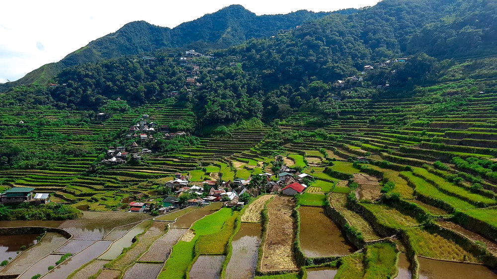 The steep, green rice terraces of Batad