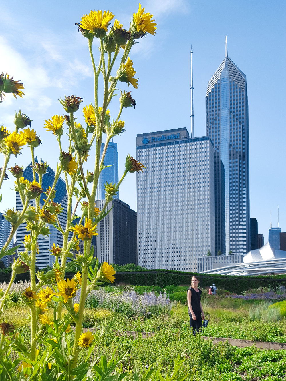 Lurie Garden is a mini-escape from the big city