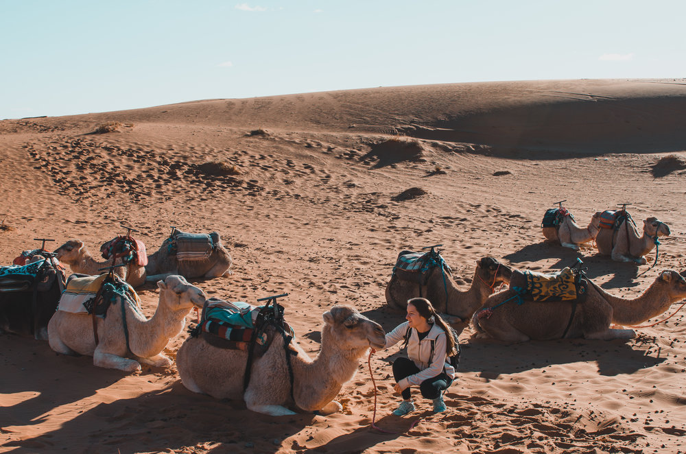 Riding a camel was one of my favorite experiences from our two-week trip to Morocco