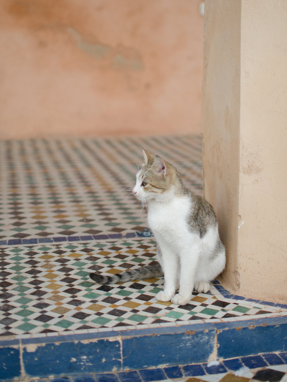 Over the course of two weeks in Morocco, I saw a lot of cute cats