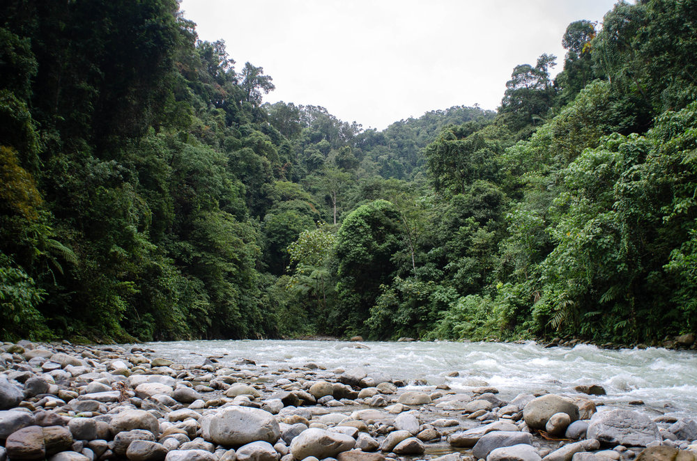 Orangutan Trekking in the Jungles of Sumatra
