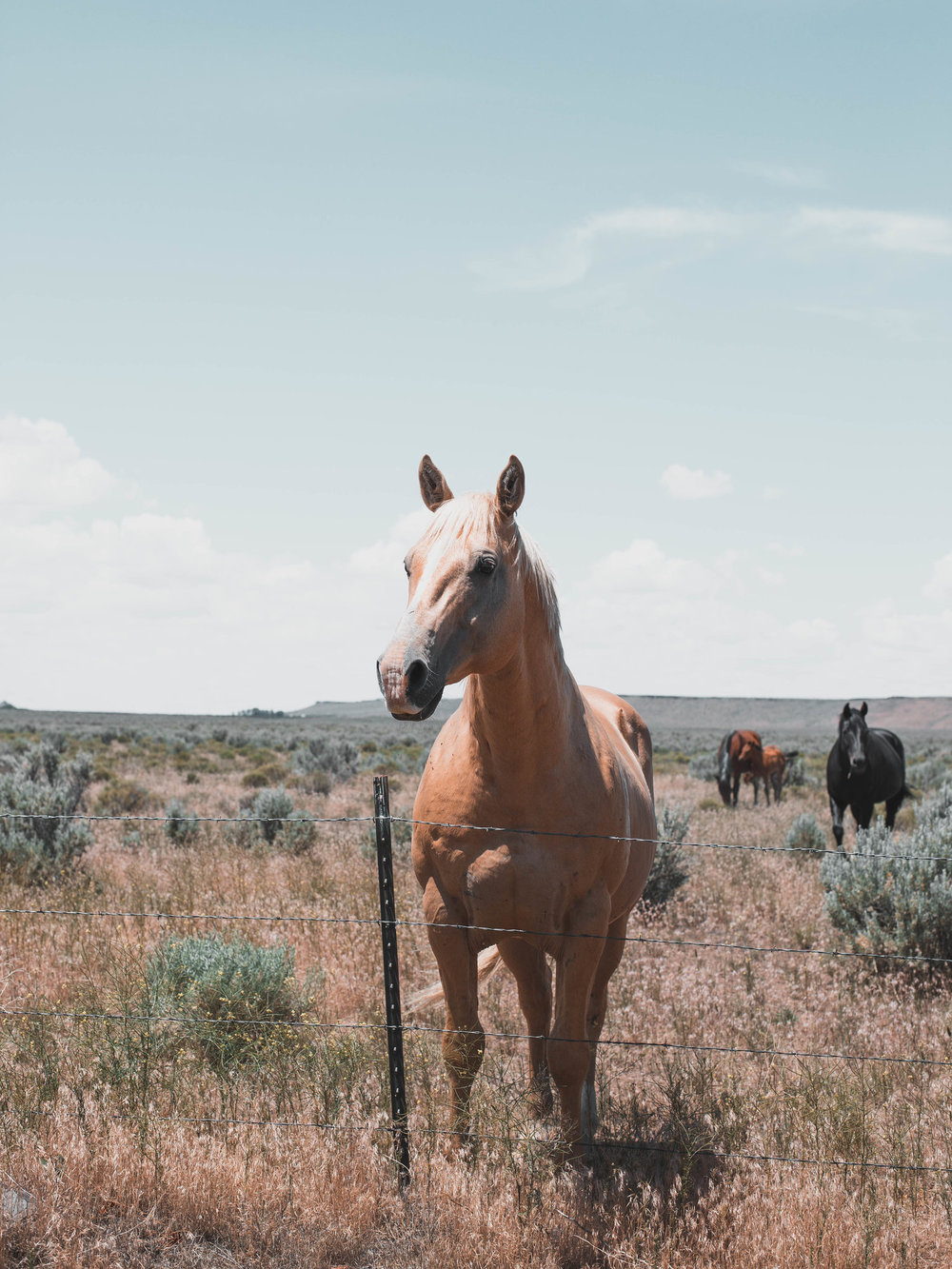 Said, 'hi,' to some horses in Burns, OR