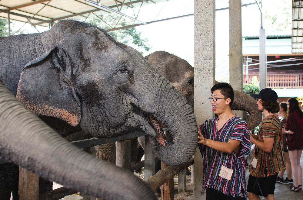 We loved getting to feed and pet elephants in Thailand