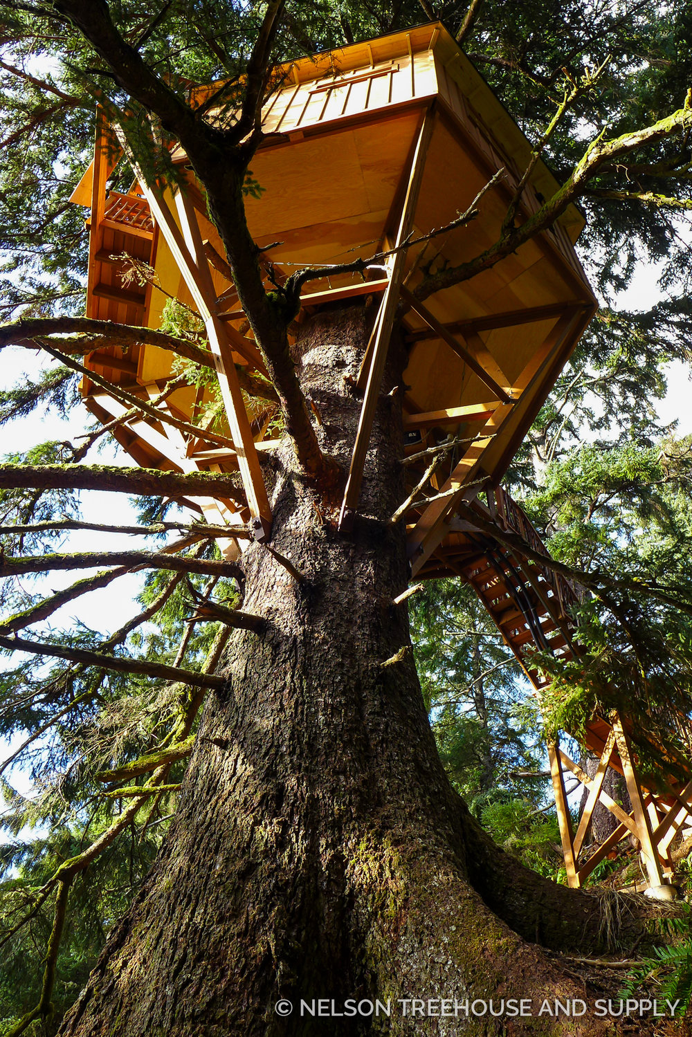 This orgeon Treehouse is an example of single-tree design.