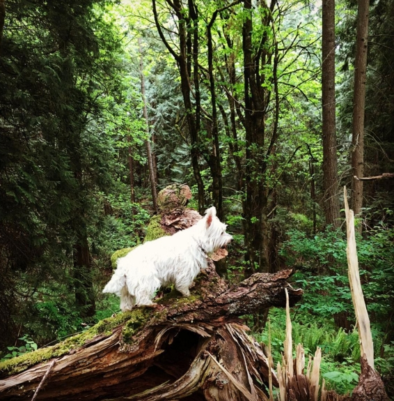 Chica also loves exploring the Pacific Northwest's verdant forests.
