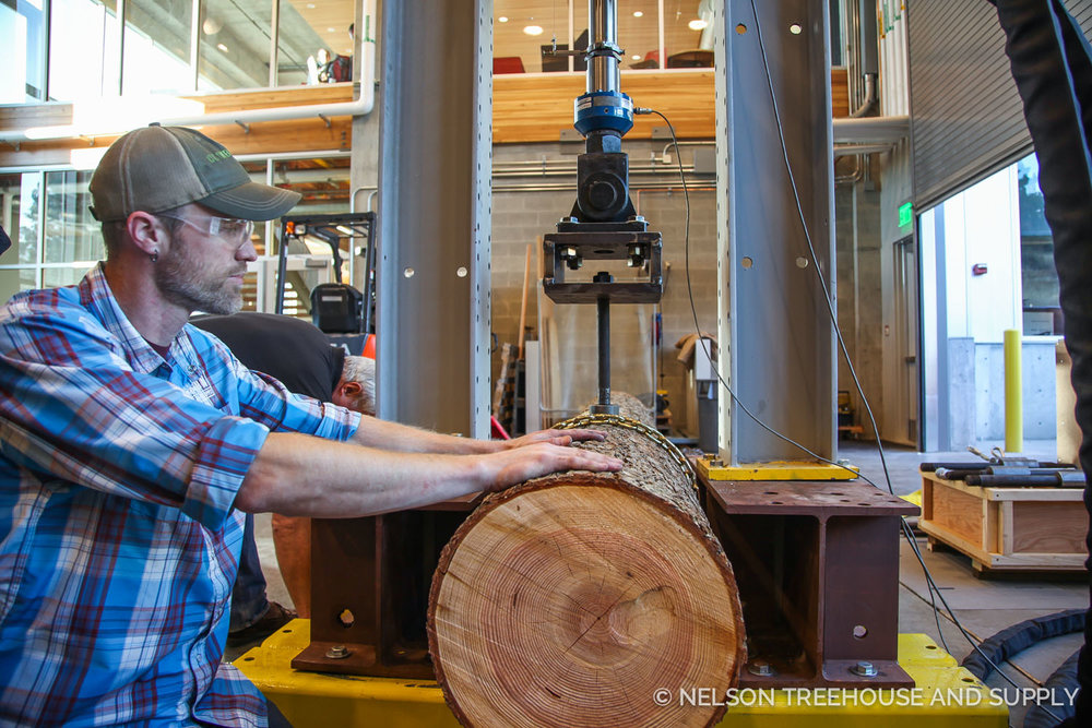 Scott atkins, One of our project managers, helps test the weight-bearing capacity of NT&S treehouse hardware at Washington State University.
