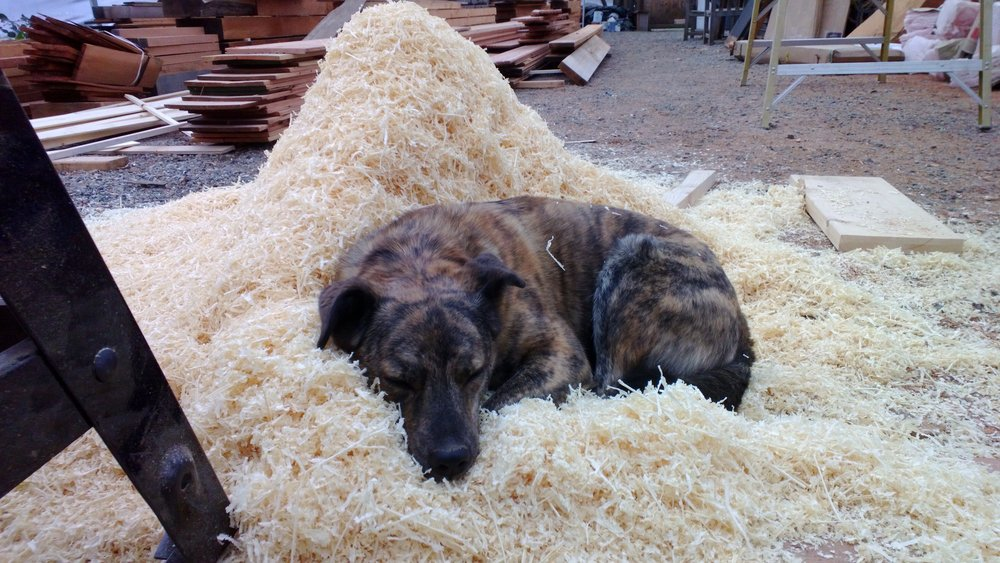 Toby's trusty dog, Neko, plays an essential role in keeping toby inspired and on task. Here, Neko feigns sleeping  on a pile of sawdust in the NTS shop - in reality, she's keeping a close eye on toby.