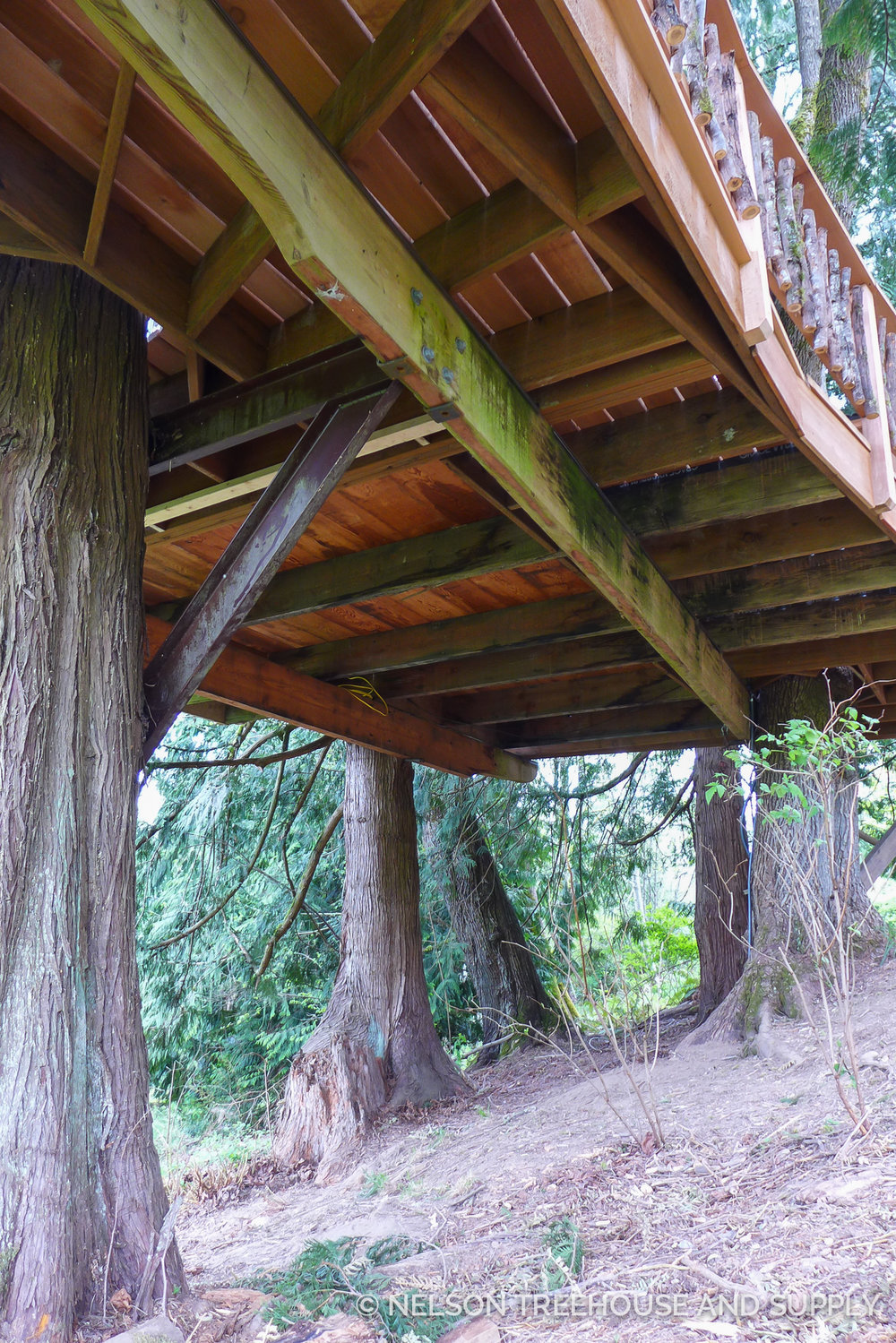 After supporting the treehouse on temporary posts, the crew raised the treehouse, slid out a rotted beam, and replaced it with pressure-treated wood.