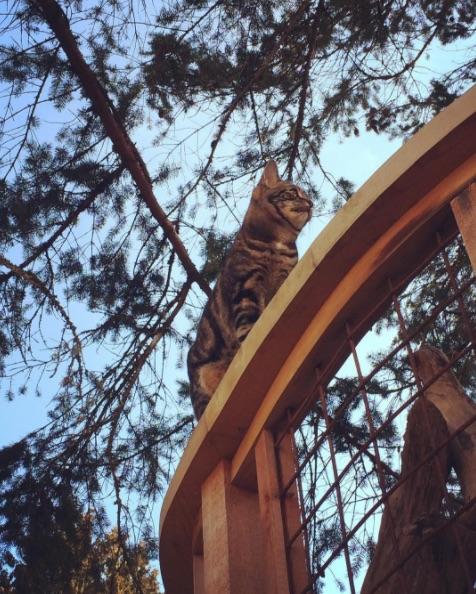 Danger Cat Charlie Nelson