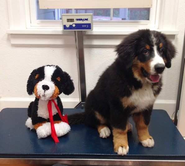 On the list of things that lead to inaccurate scale readings: Stuffed animal doppelgängers.