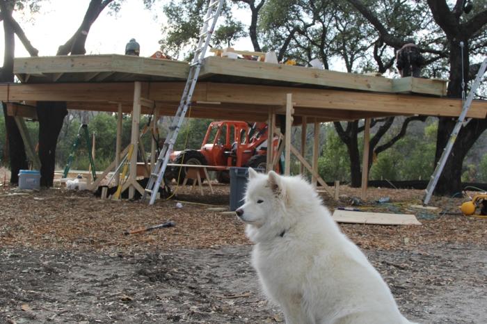 Stupsi wondering when Pete will bring her more chicken biscuits.
