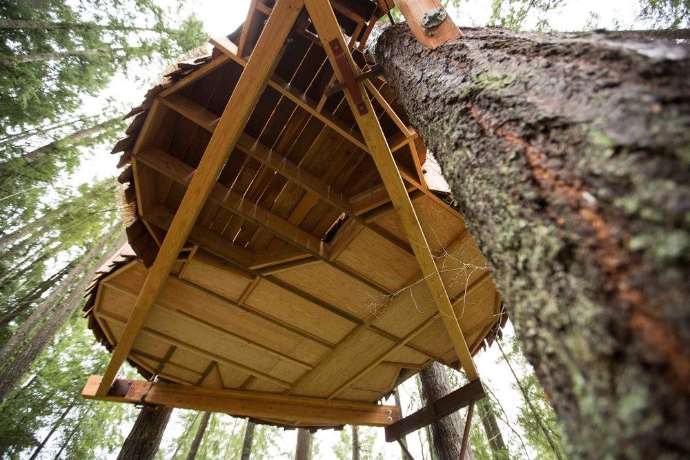 safari-treehouse-4