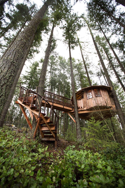 Safari Hut Treehouse