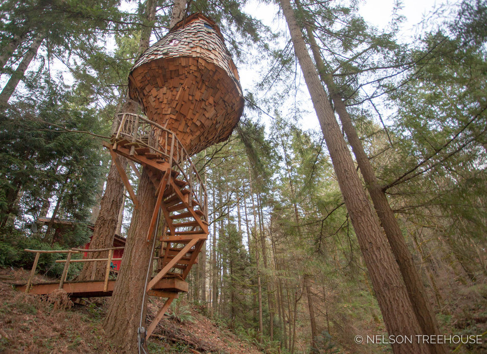 Staircase to the Beehive Treehouse