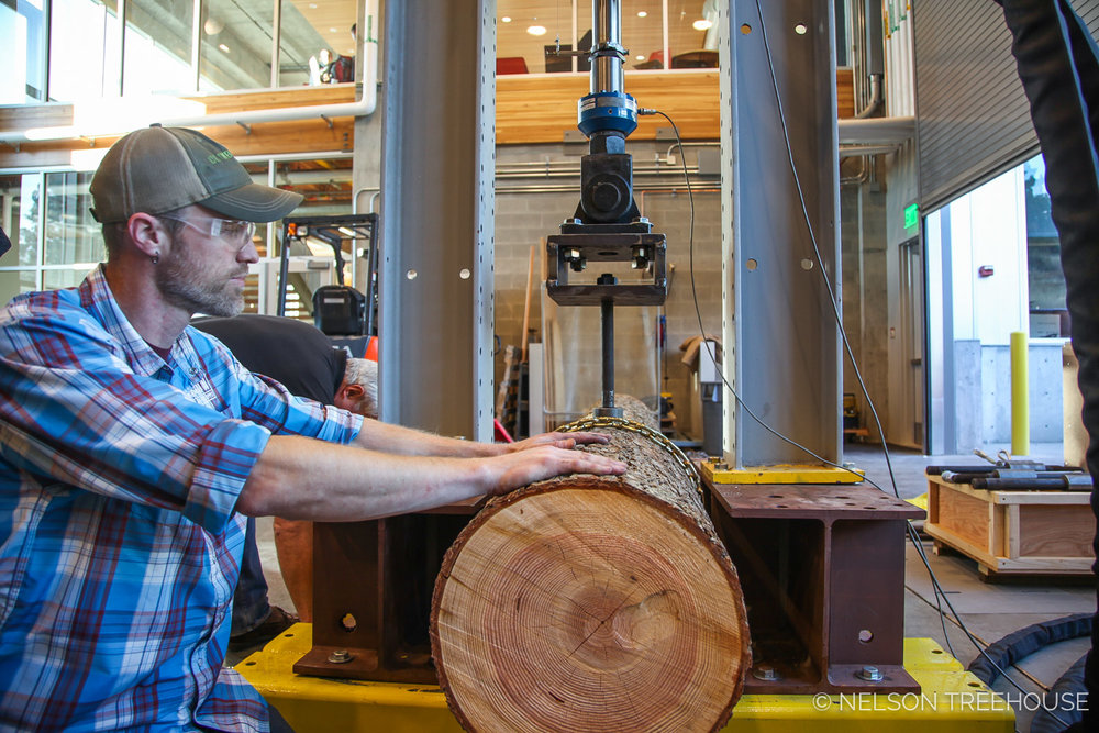Nelson Treehouse Project Manager Scott Atkins preps a log for TAB testing at the WSU Composite Materials and EnginEering Center.