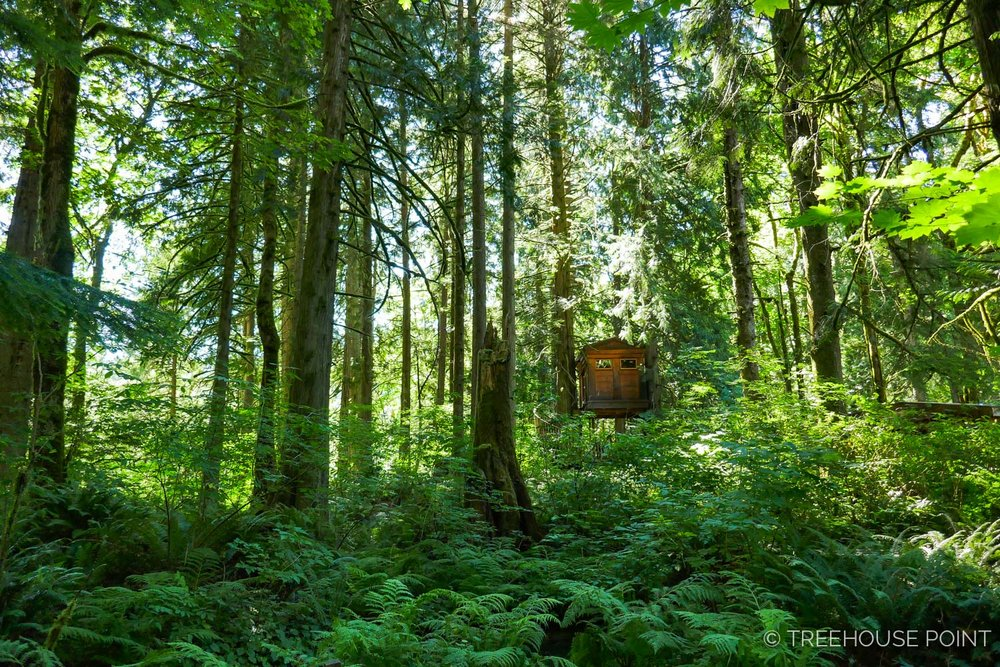 The Bonbibi Treehouse peeks out from the opulent foliage at Treehouse Point..