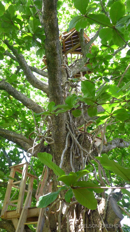 Kauai-Nelson-Treehouse-2018-243.jpg