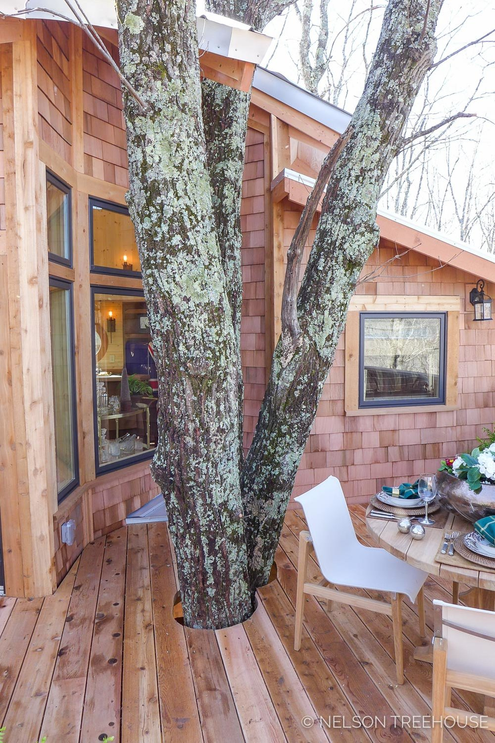 Super Spy Treehouse - Nelson Treehouse 2018 - Trees through deck