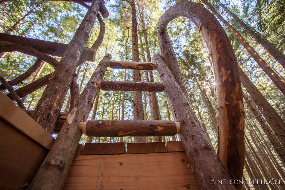 Treetop-Movie-Theater-2018-Nelson-Treehouse-752.jpg