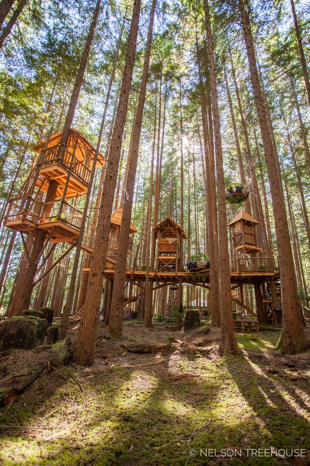 Treetop-Movie-Theater-2018-Nelson-Treehouse-191.jpg