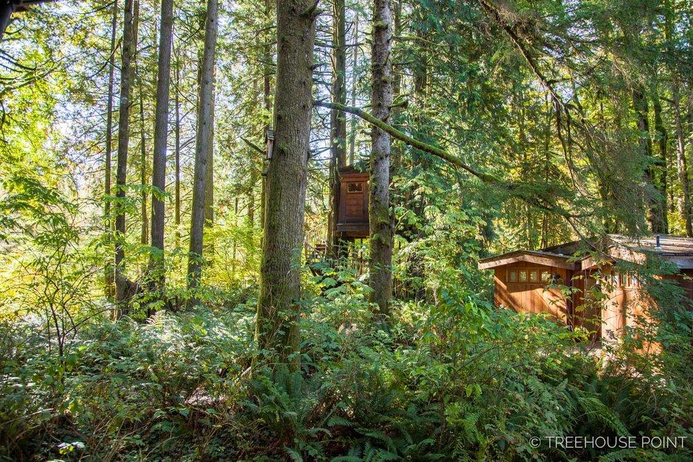 Trillium-Treehouse-Point-2018-30.jpg