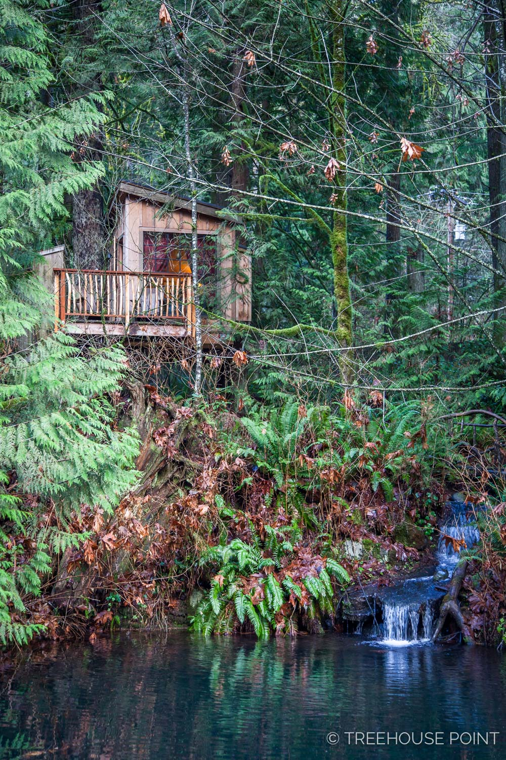 Nest_TreeHouse_Point_2018-1.jpg