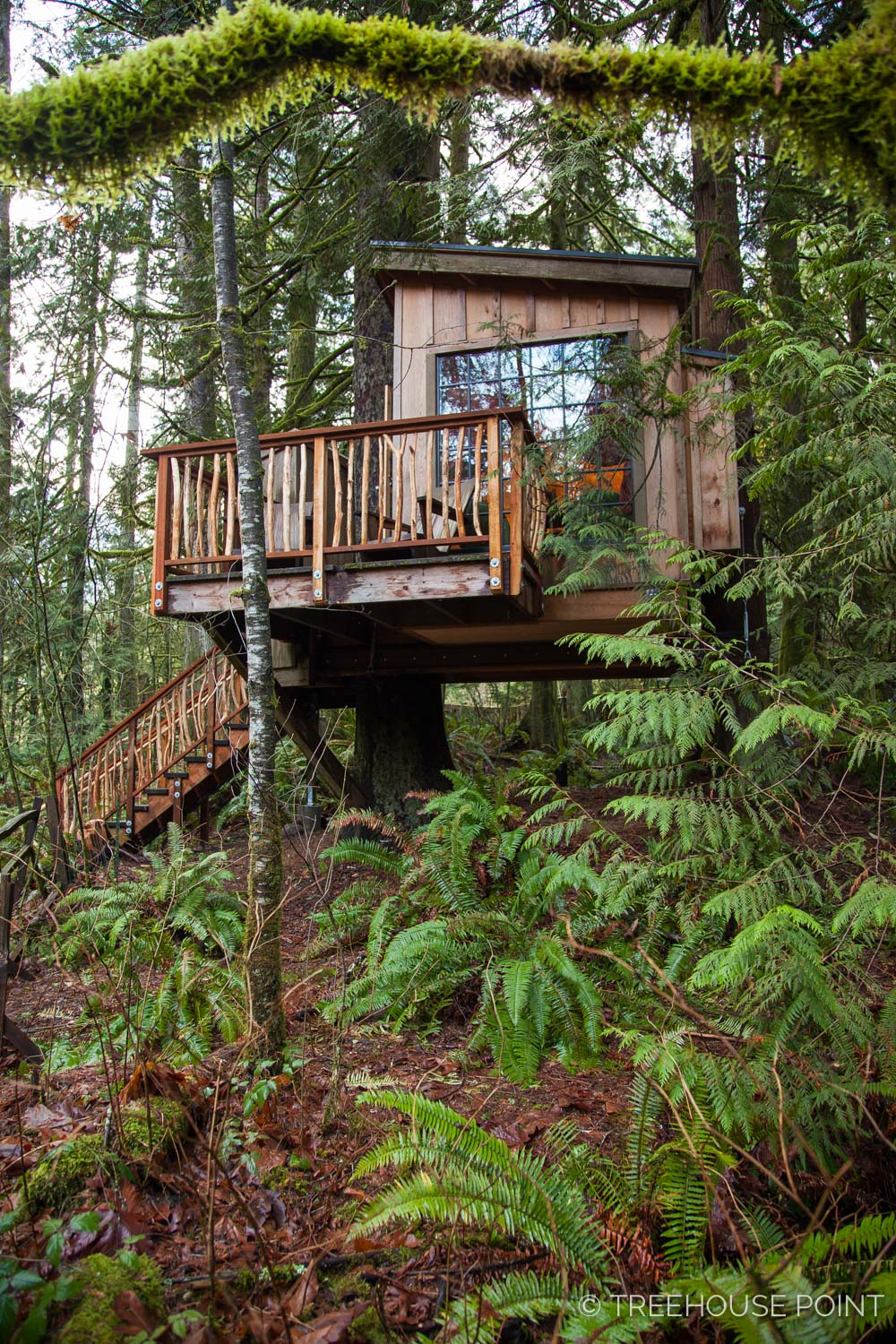 Nest_TreeHouse_Point_2018-7.jpg