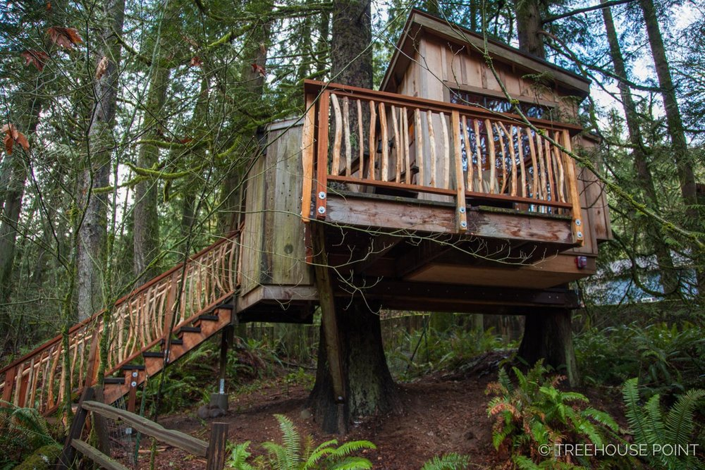 Nest_TreeHouse_Point_2018-14.jpg