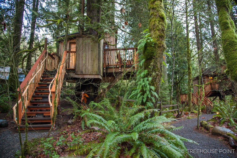 Nest_TreeHouse_Point_2018-16.jpg