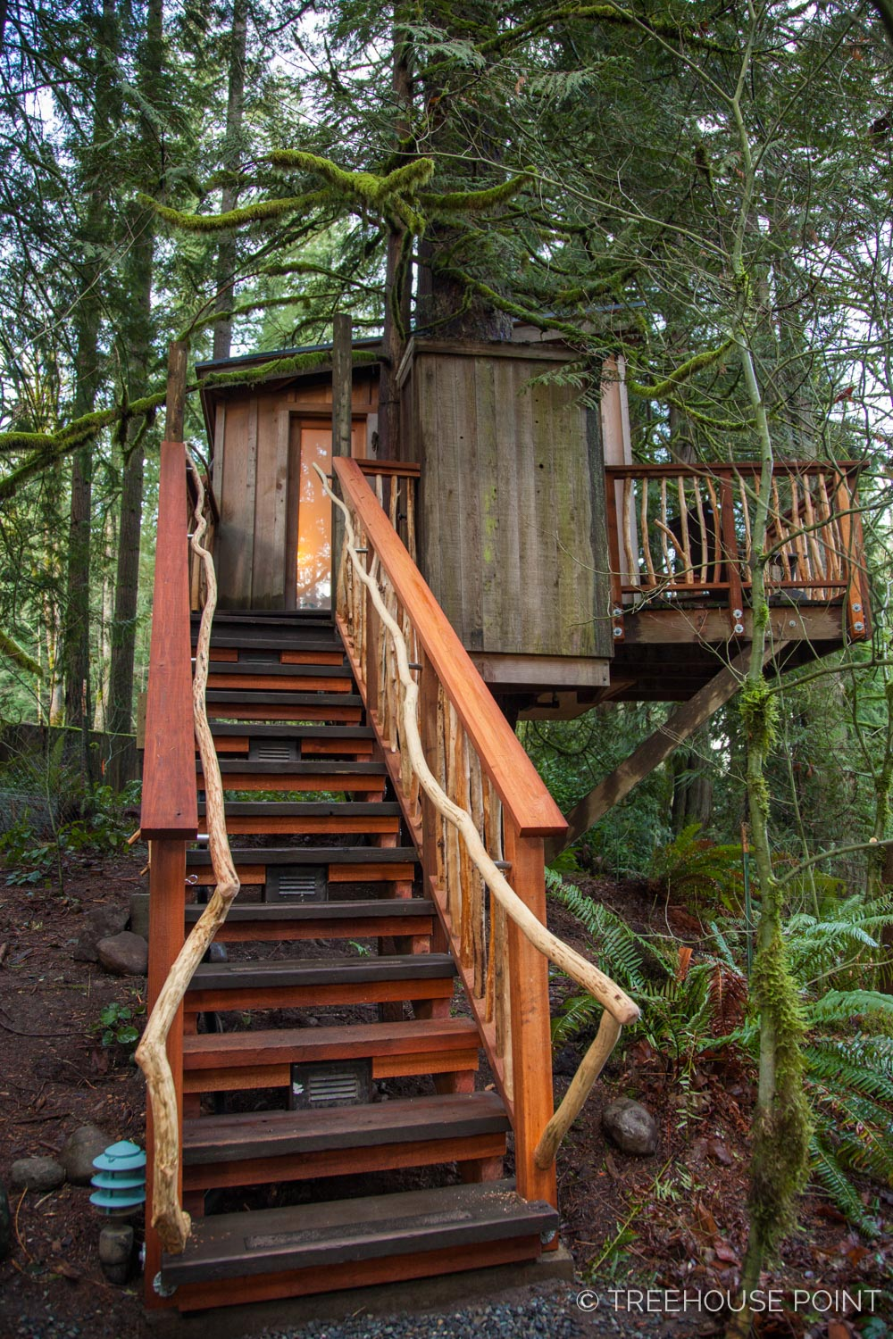 Nest_TreeHouse_Point_2018-20.jpg