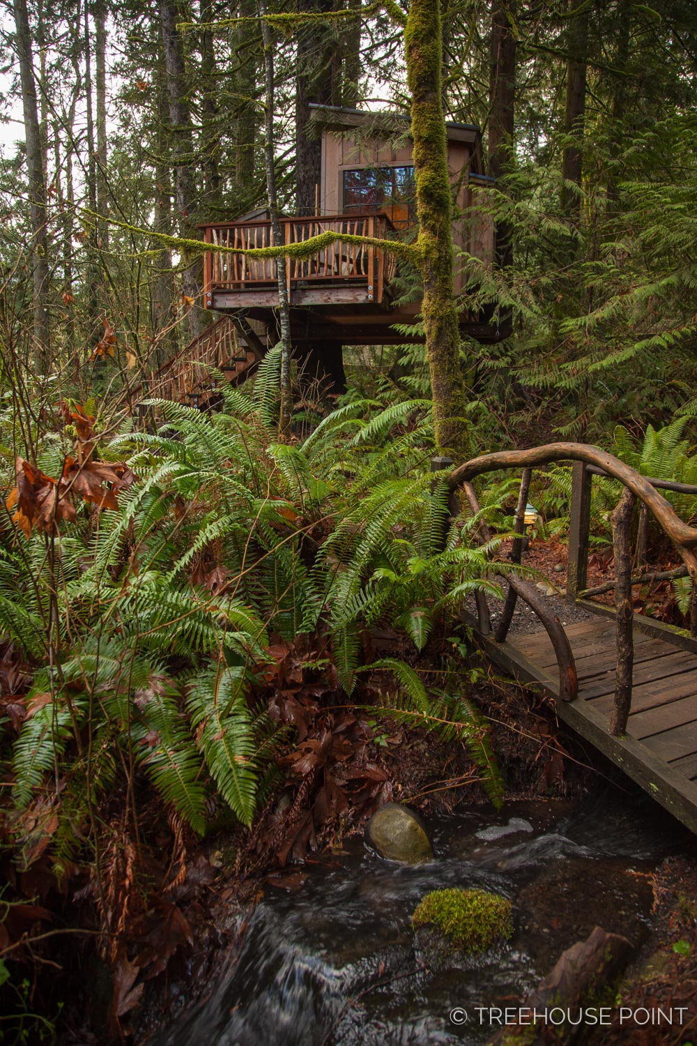 Nest_TreeHouse_Point_2018-32.jpg