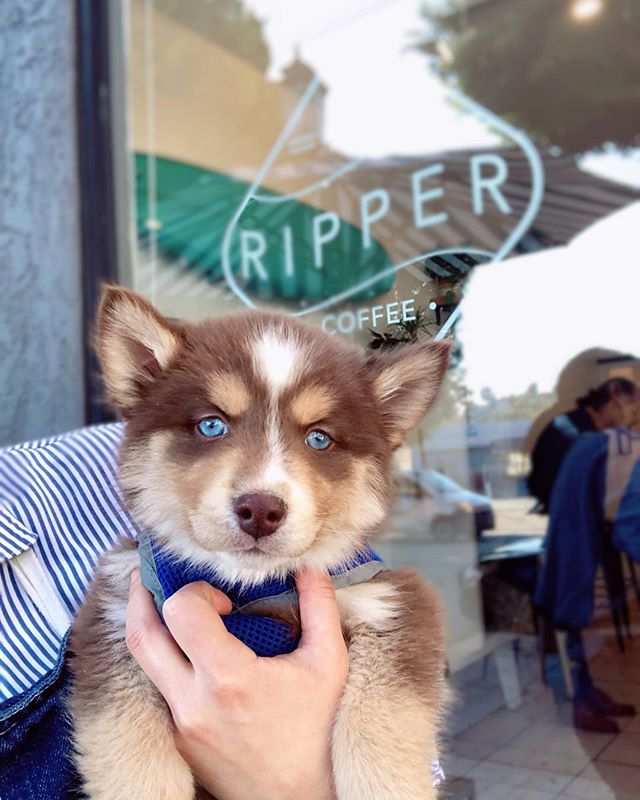Happy Sunday! Now look into this puppy's eyes & come get a coffee @littlerippercoffee