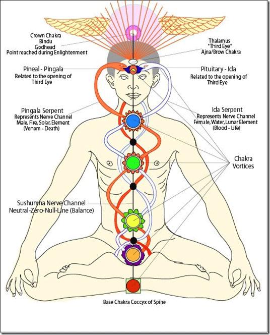 The Prana Body | http://shaktianandayoga.com/teachings/chakras/