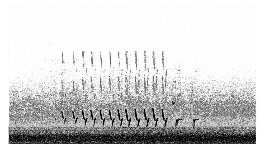 K.r.m. Mooney   Spectrogram II , 2018, Spectrogram, 6 x 3 ⅛ inches