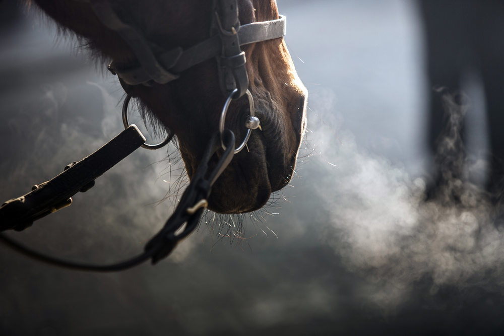 Recent research in the human medical field has shown that blue wavelength light can inhibit specific microbial  growth. The Equilux system reduces the microbial concentrations in the horse's environment that could  contribute to respiratory infection, extended wound healing time and skin diseases such as ringworm.