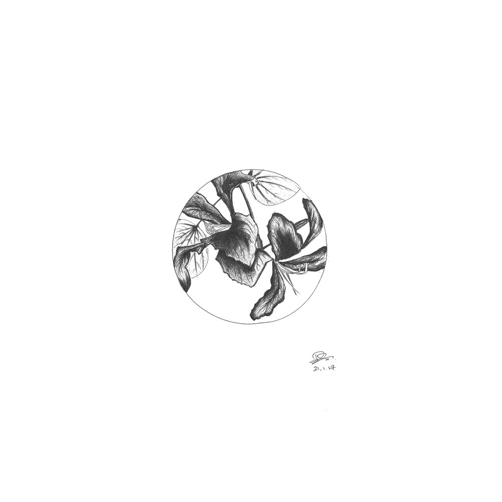 bauhinia circle.jpg
