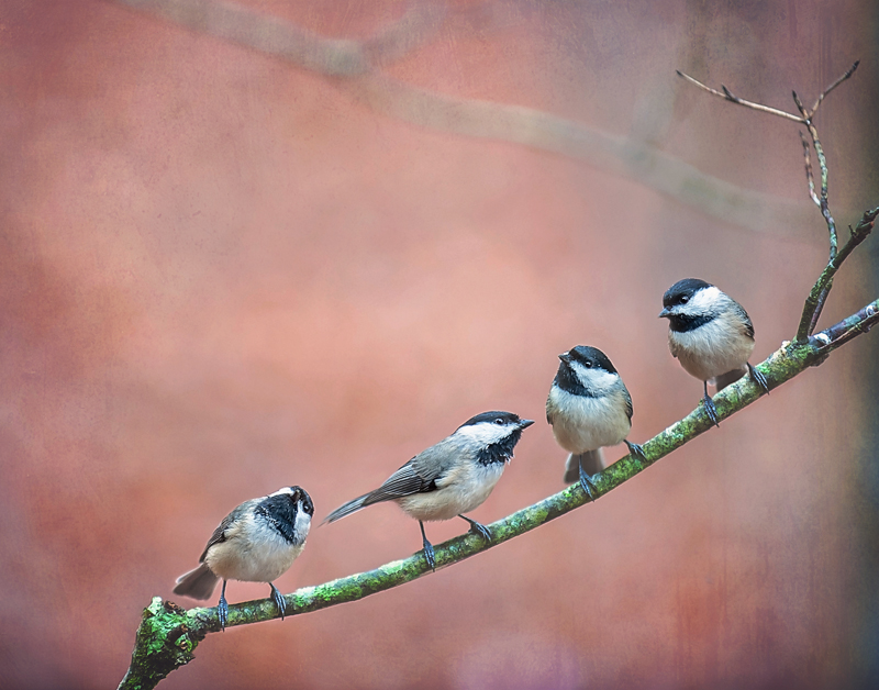 11x14 chickadees pink copy.jpg