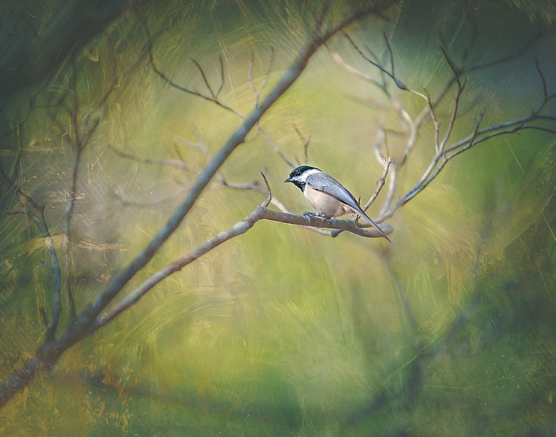 11x14 chickadee green copy.jpg