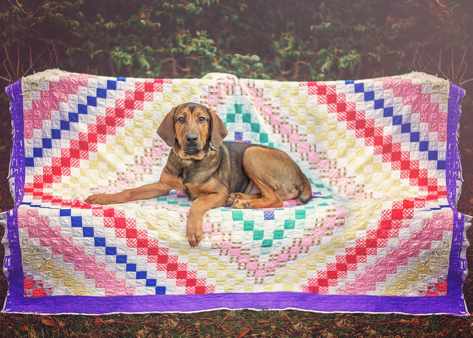 Pretty backdrop.  Colorful, vibrant backdrops are eye-catching when scrolling through social media. A nice backdrop will help get a dog noticed. I like to use thrift store quilts