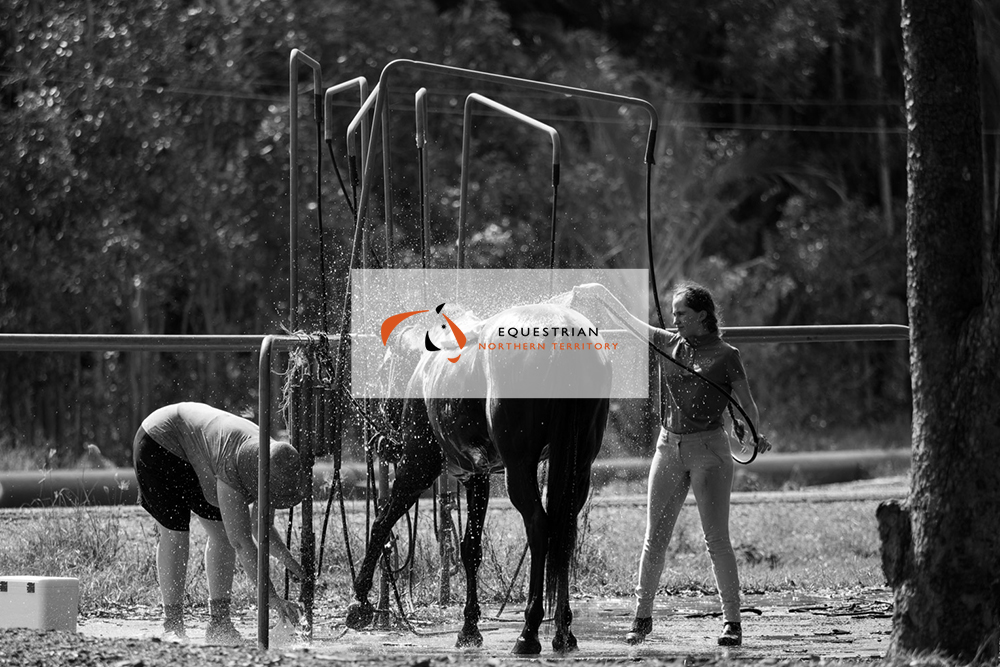 equestriannt_7.jpg
