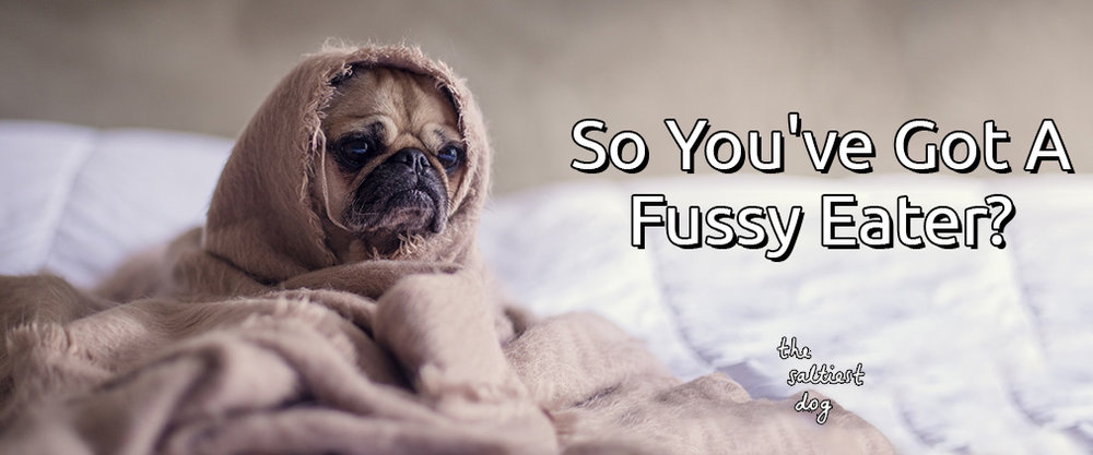 blog-pictures-fussy.jpg