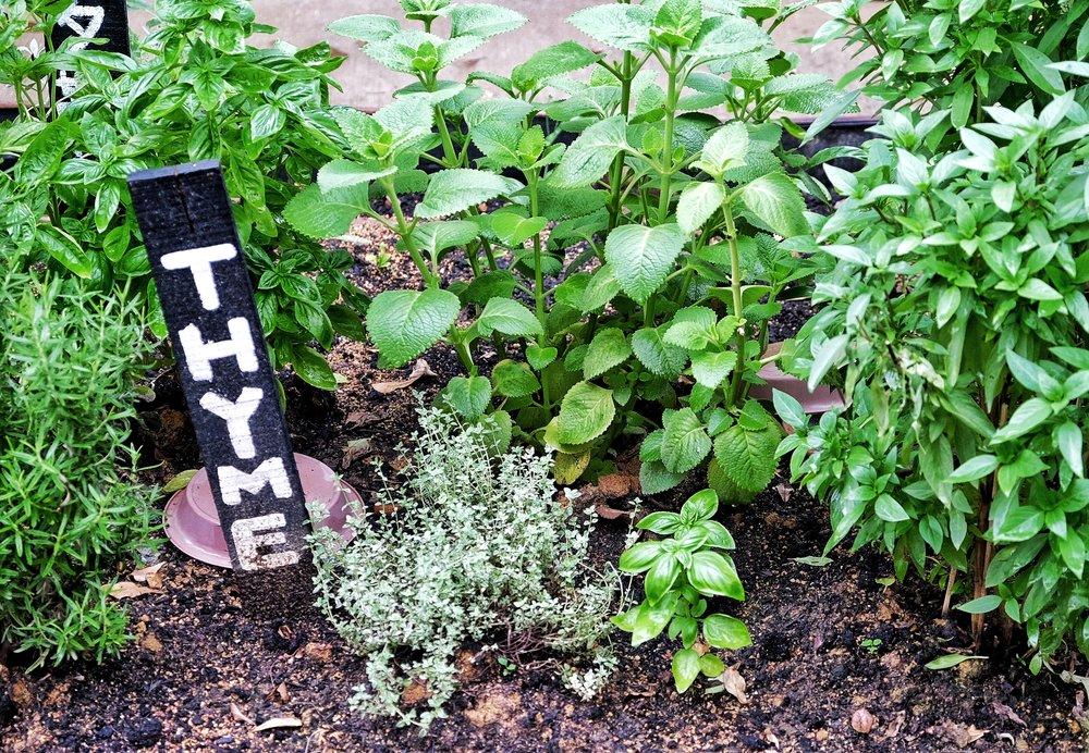 community garden tiong bahru.jpeg